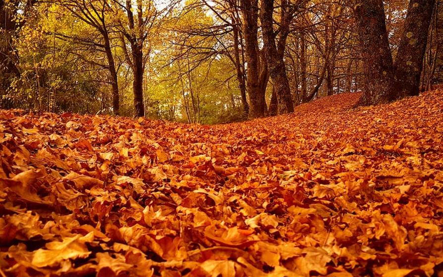 Hogsback Autumns are a spendour of rich colours