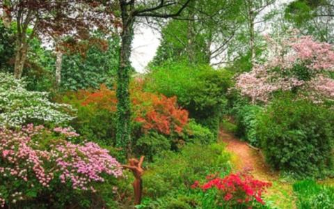 Hogsback gardens