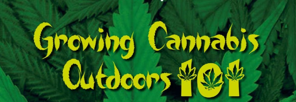 aturday 14h00-16h30 - Growing Cannabis Outdoors @  King's Lodge Hotel. Cost R150 pp. Booking essential. Limited space. Contact Jo 076 158 6722
