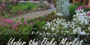 UNder the oaks morning market at the Edge, Hogsback