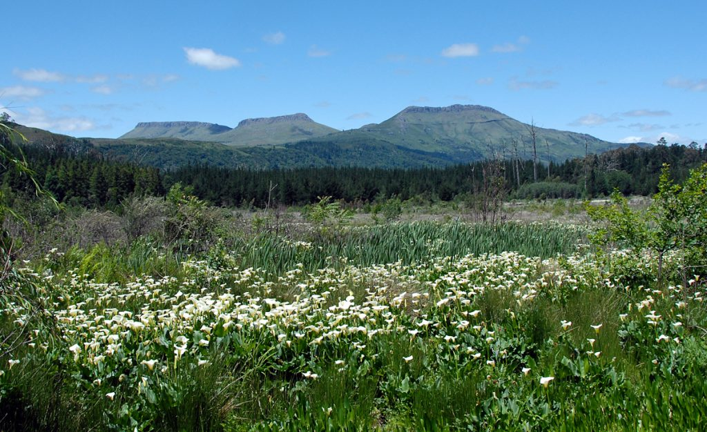 Three Hog Mountains in Hogsback