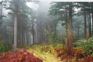The colourful forests